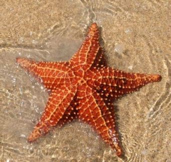stella-di-mare,-acqua,-sabbia-225570